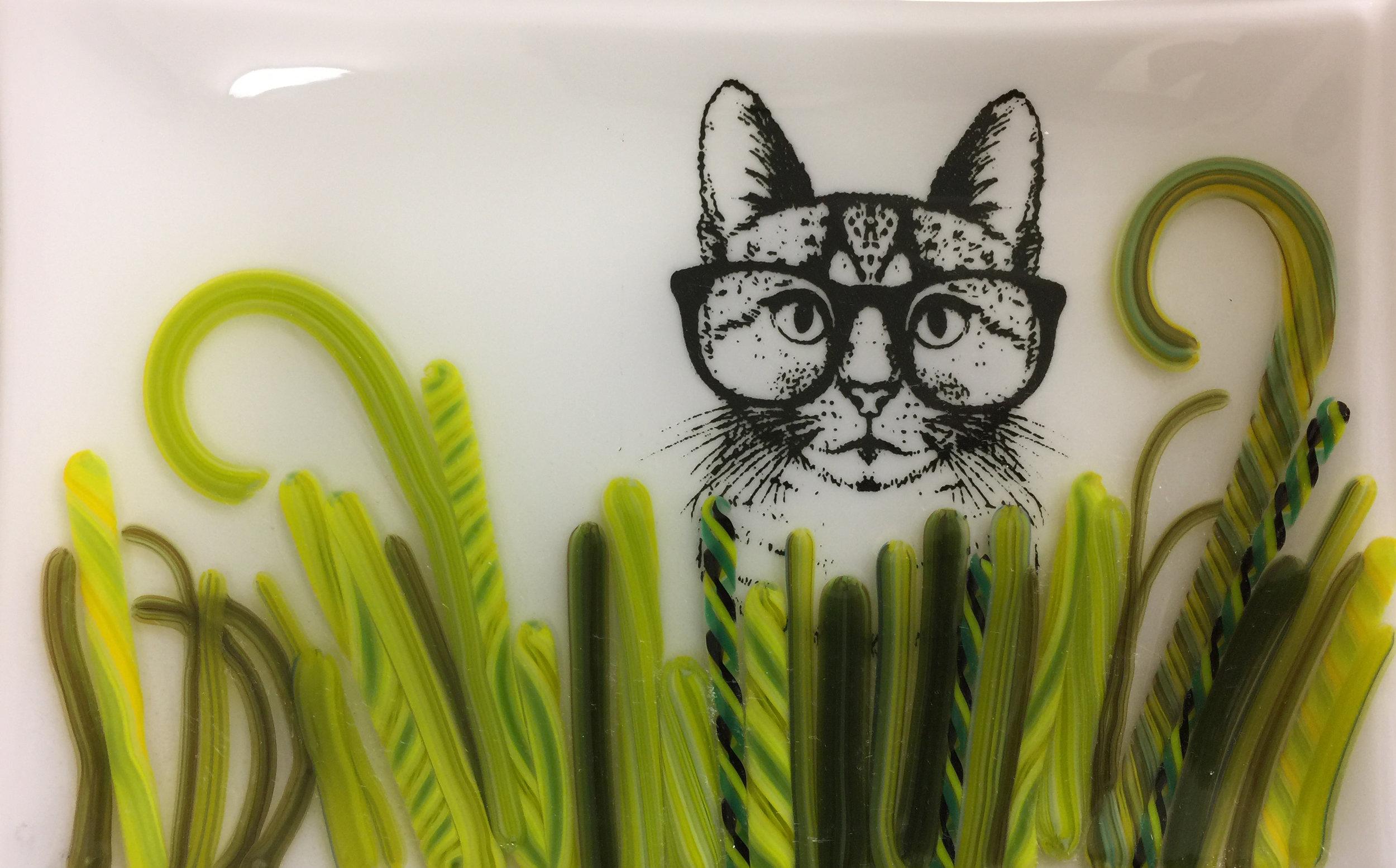 cat in vit.jpg