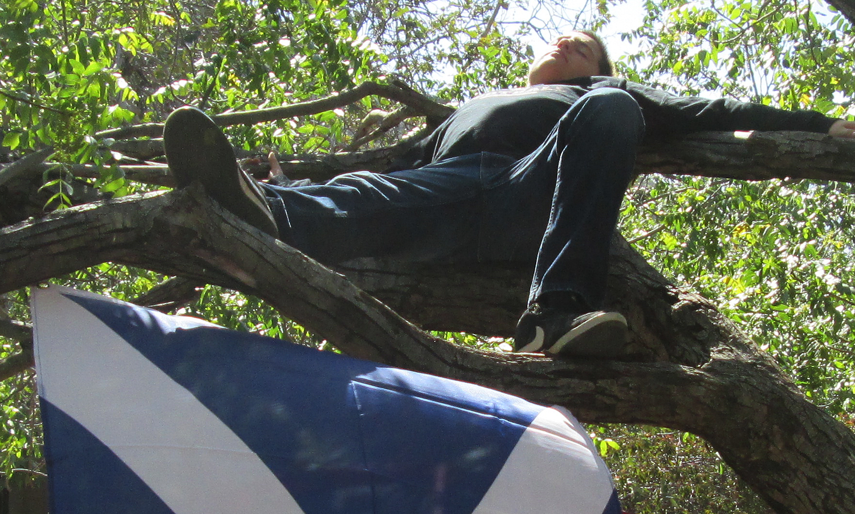 jezza-tree.jpg