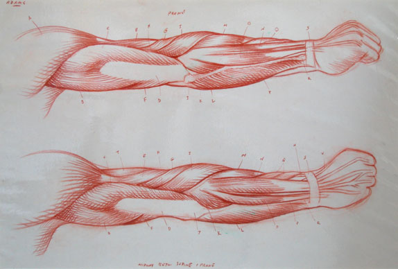 arm.rotation2.72.jpg