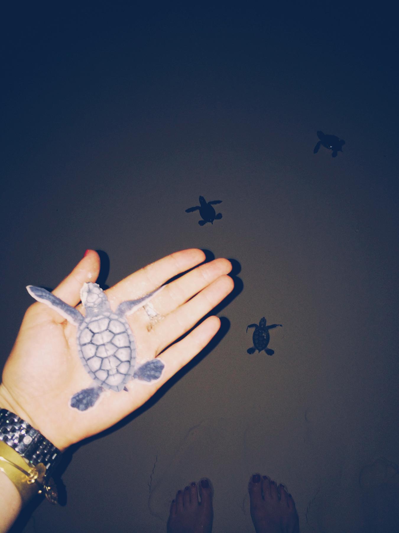 turtlehatching_whereisper.jpg