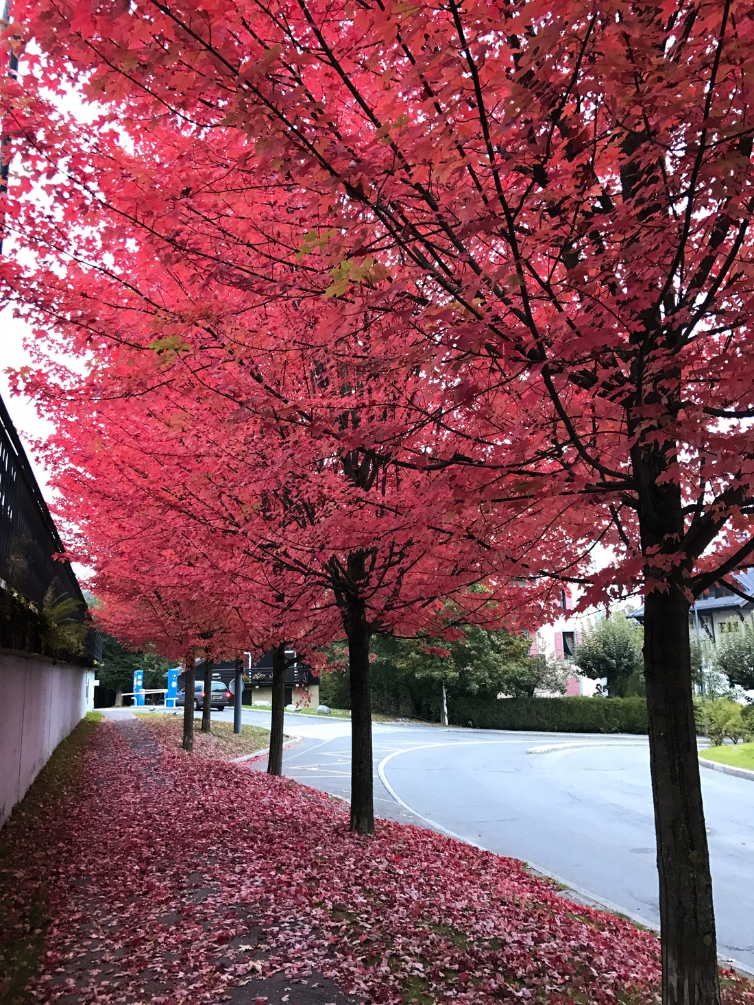 Chamonix Autumn