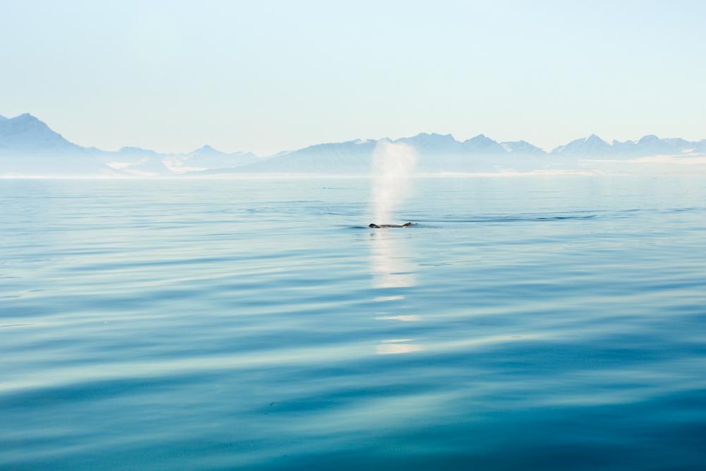 Svalbard_Pukka_WalrusIsland_PerriRothenberg_Resized-8972.jpg