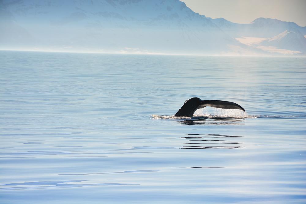 Svalbard_Pukka_WalrusIsland_PerriRothenberg_Resized-8974.jpg