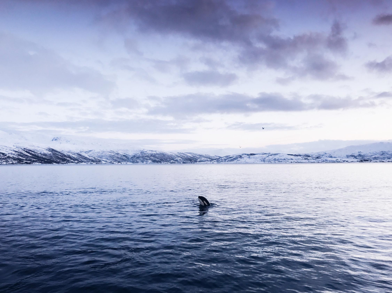 WhaleWatching_PukkaTravels_Jan15_edited_iphone-4494.jpg