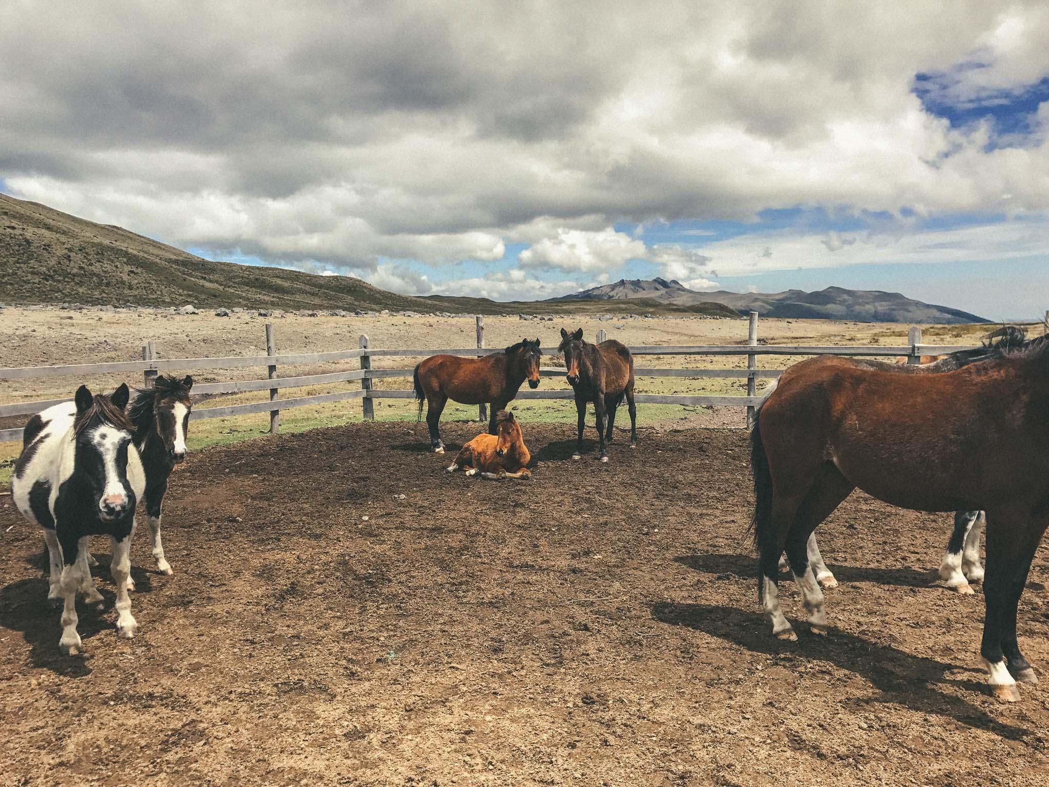 Ecuador_Horseriding-9338.jpg