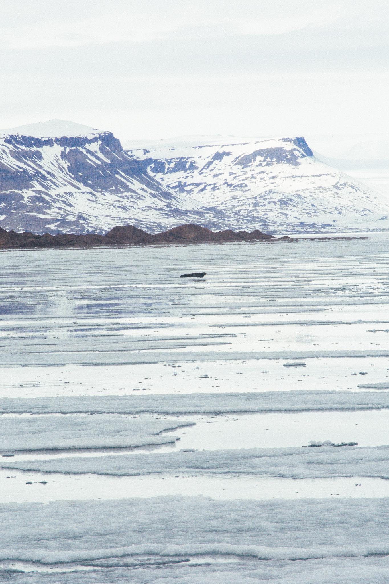 Svalbard_2018_Pukka_Perri_Rothenberg-44.jpg