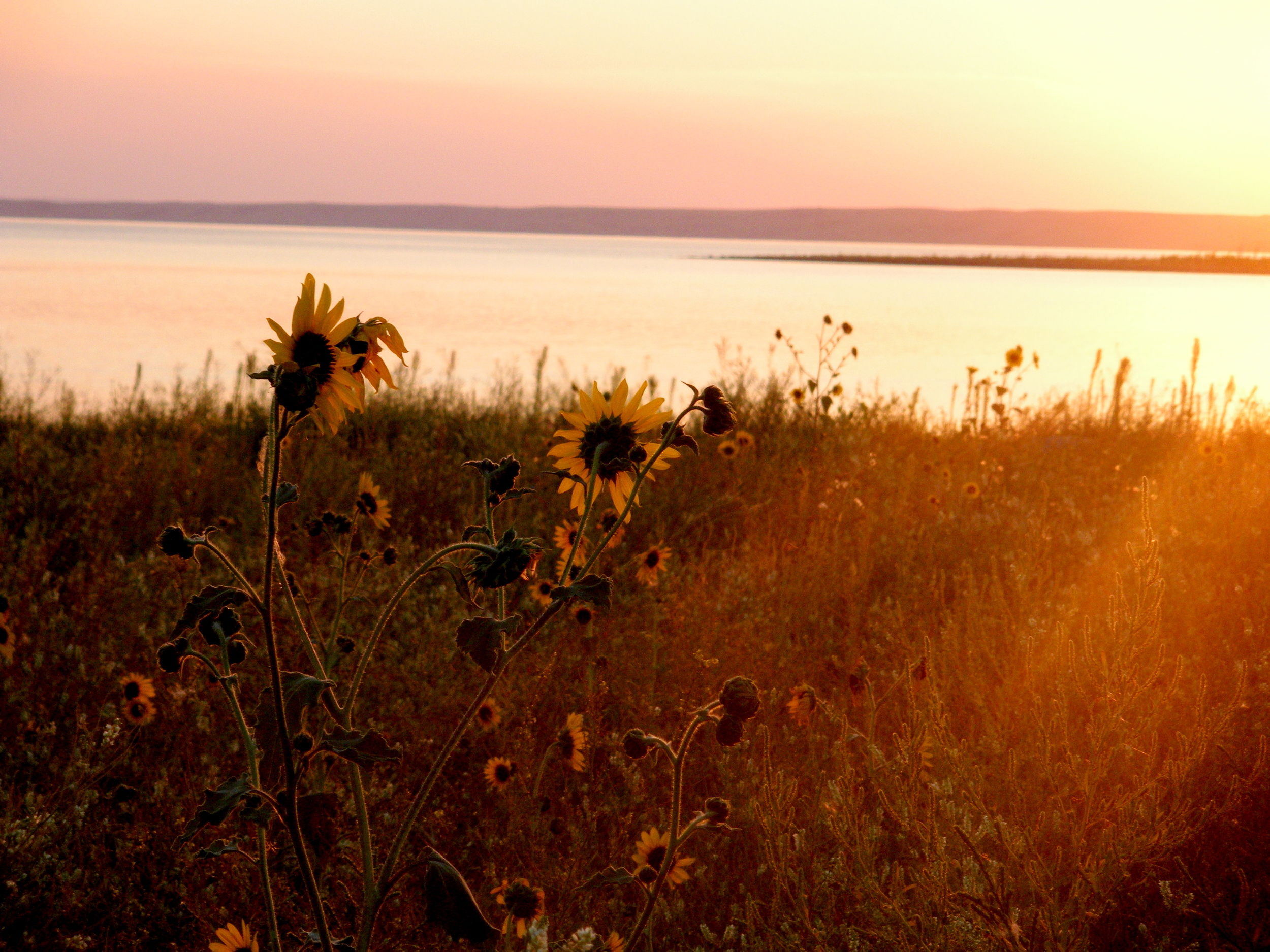 One last glimpse of the Missouri River on a beautiful evening. (August 2013, A. Gross)