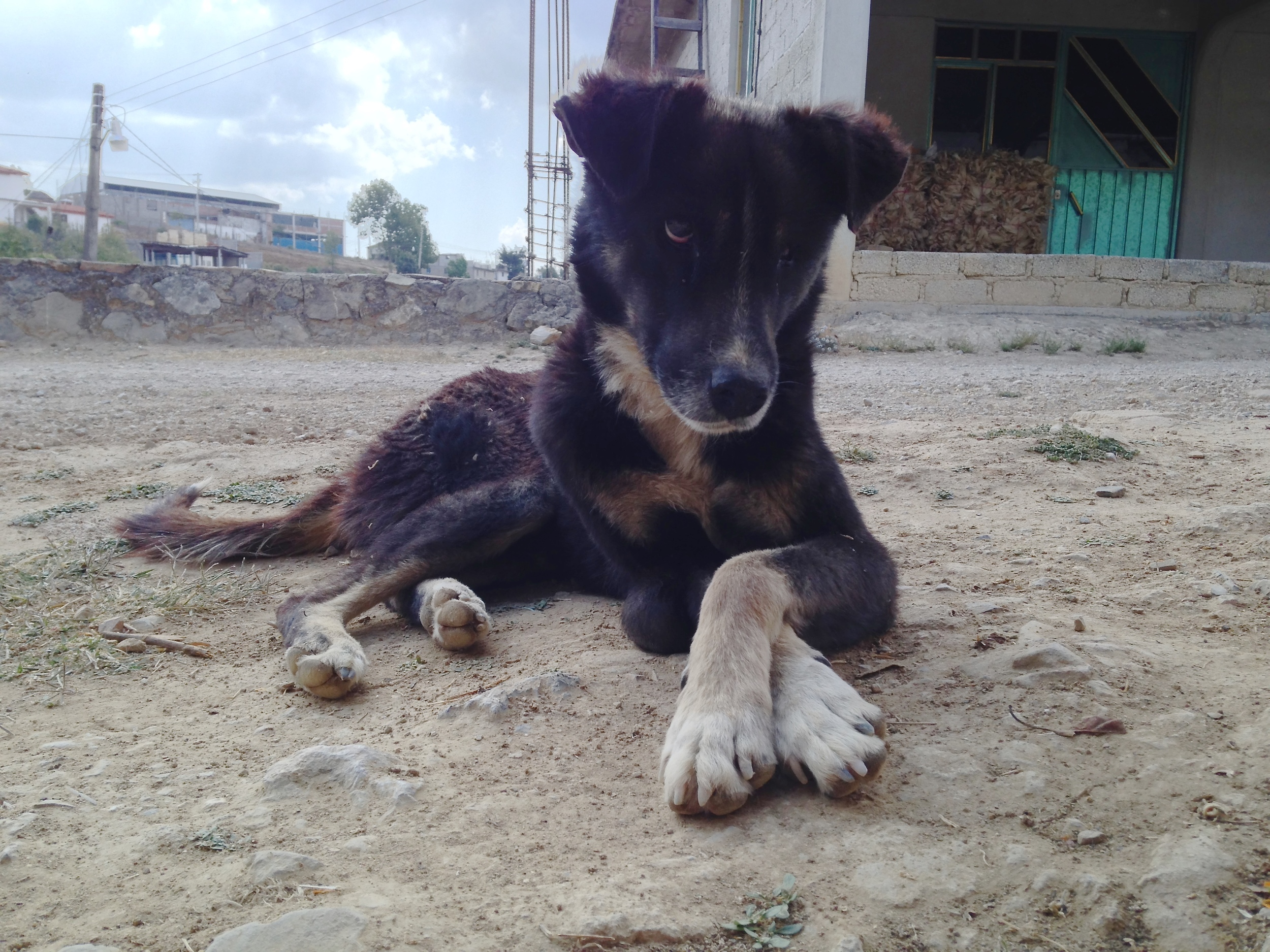 A pup poses in Santa Ana Yareni