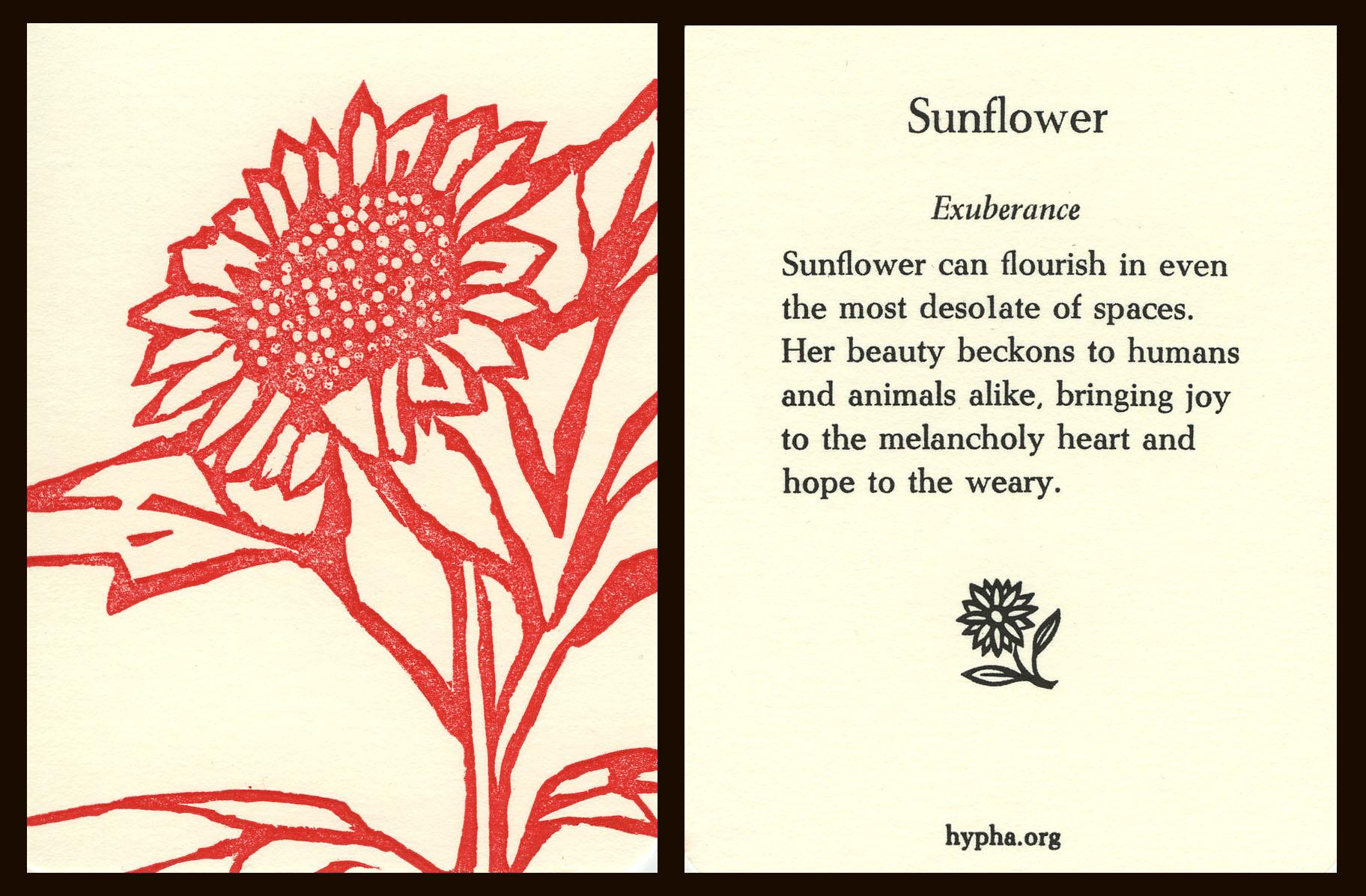 sunflowercard.jpg