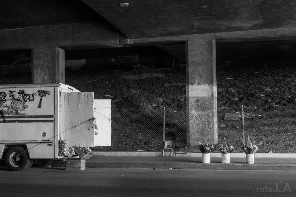 Unattended American Beauty  February 05, 2014 - 5 Freeway Indiana Overpass. East LA