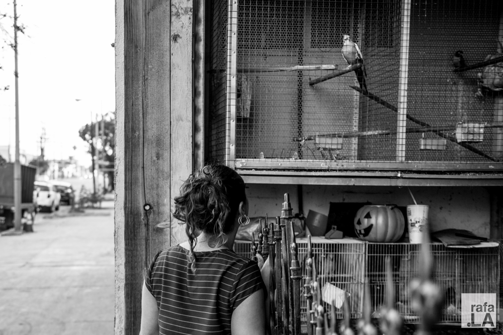 Bird Watcher.  June 26, 2014 - Boyle Heights