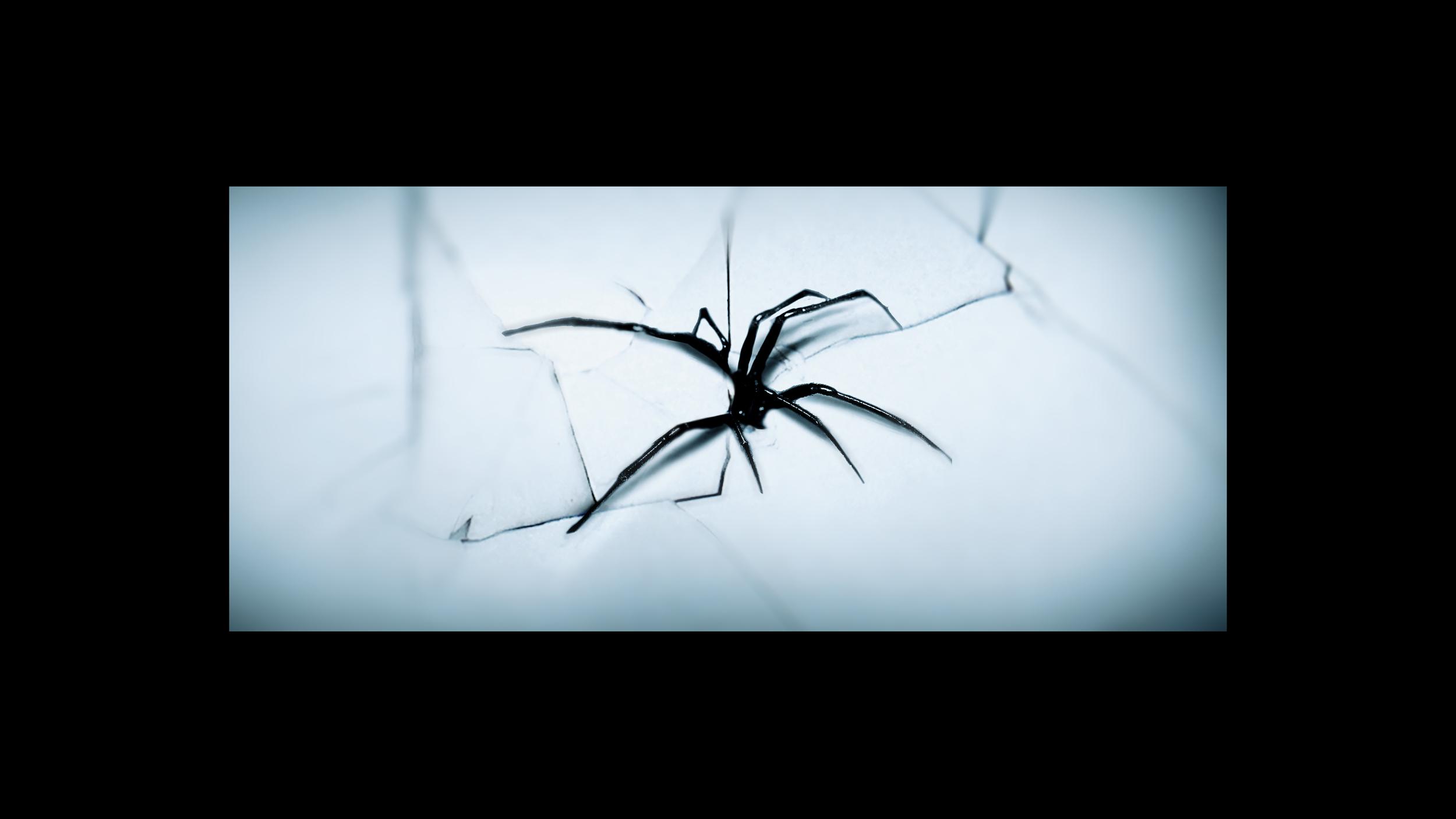 Lauren-Indovina-Penny-Dreadful-Titles-PSYOP-Concept-Art-Delicate-Spider.jpg
