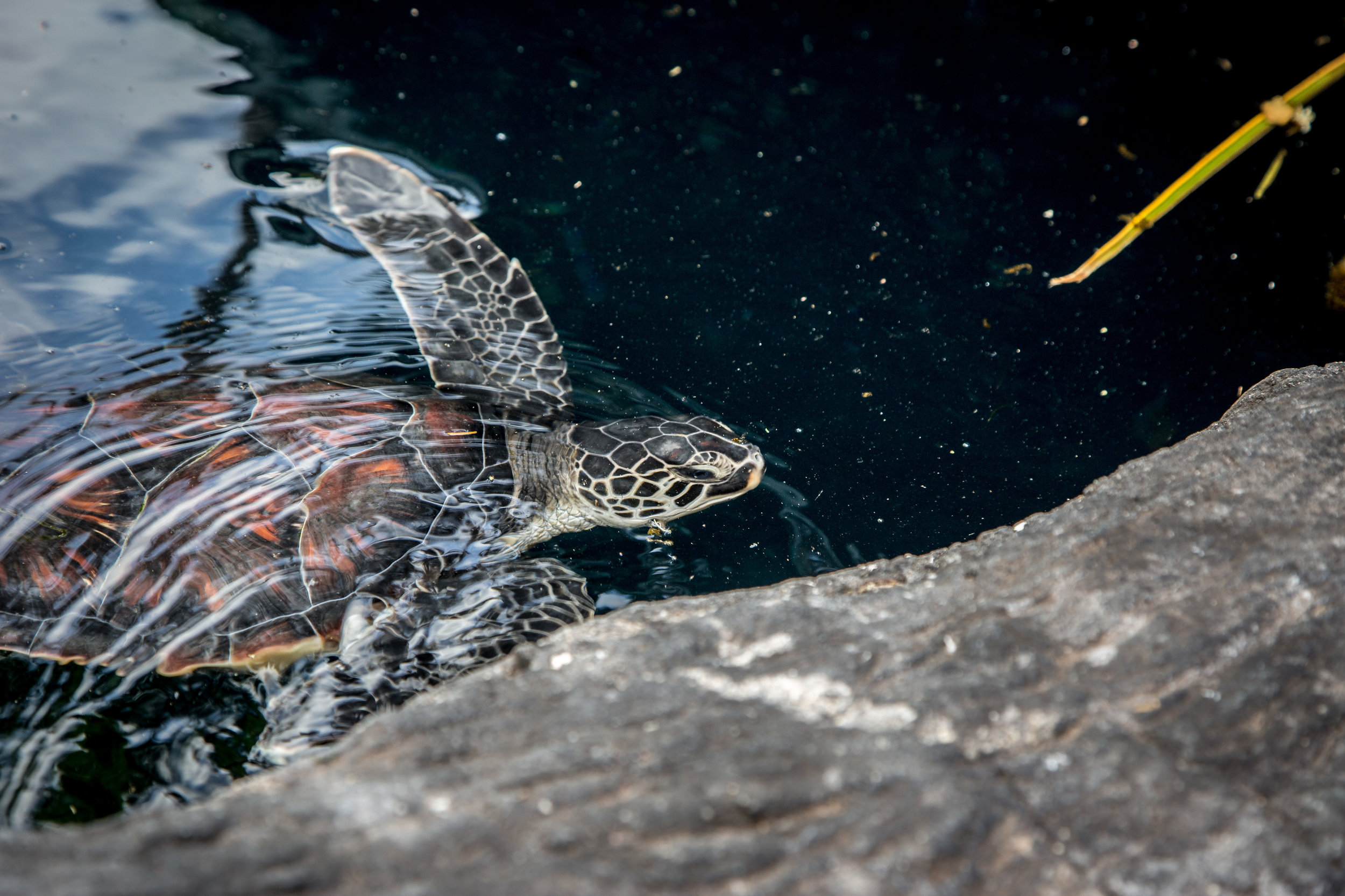 www.mattshellphoto.com-6813.jpg