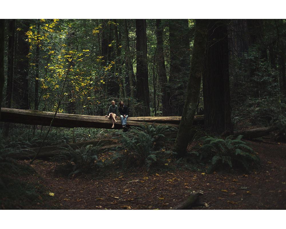 022-usa-california-redwoods.jpg