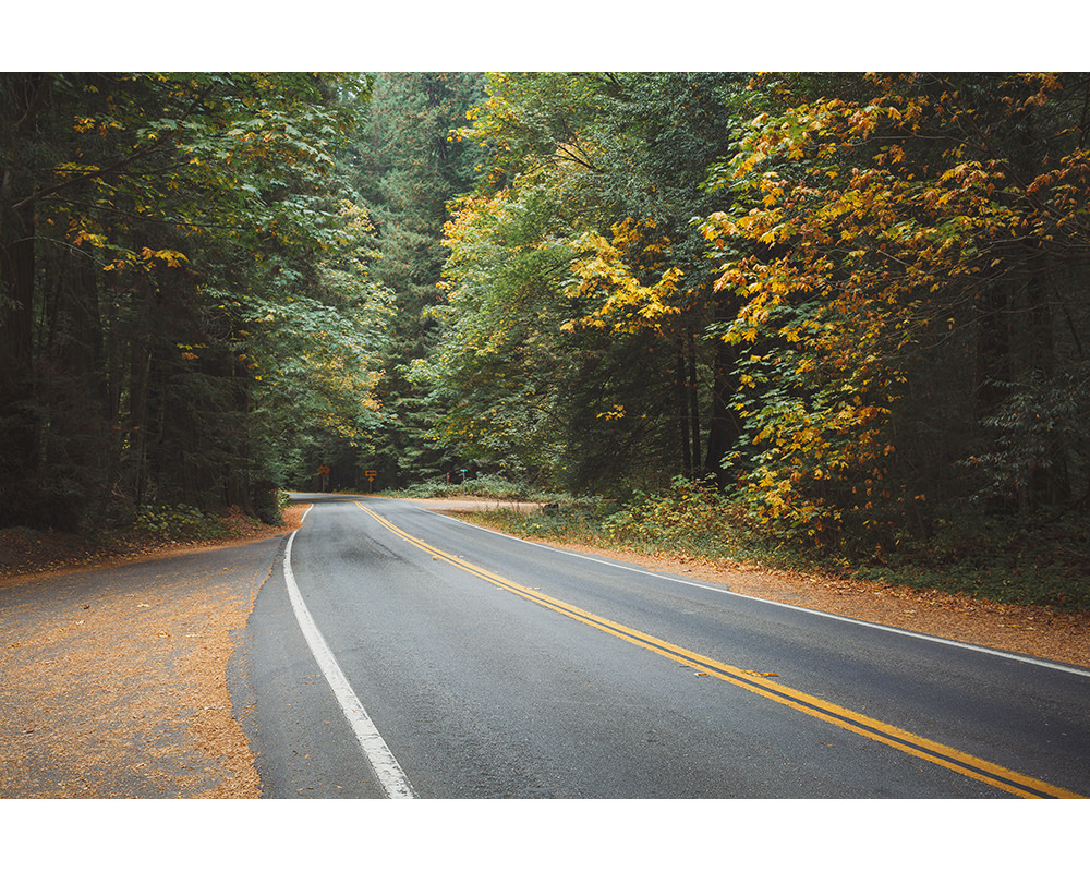 021-usa-california-redwoods.jpg