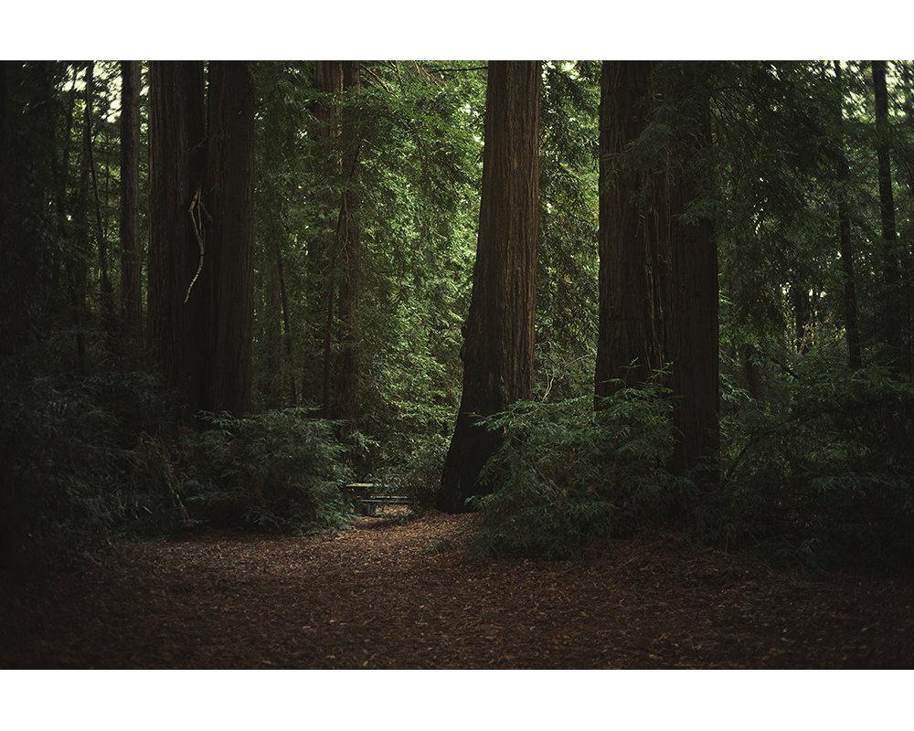 028-usa-california-redwoods.jpg