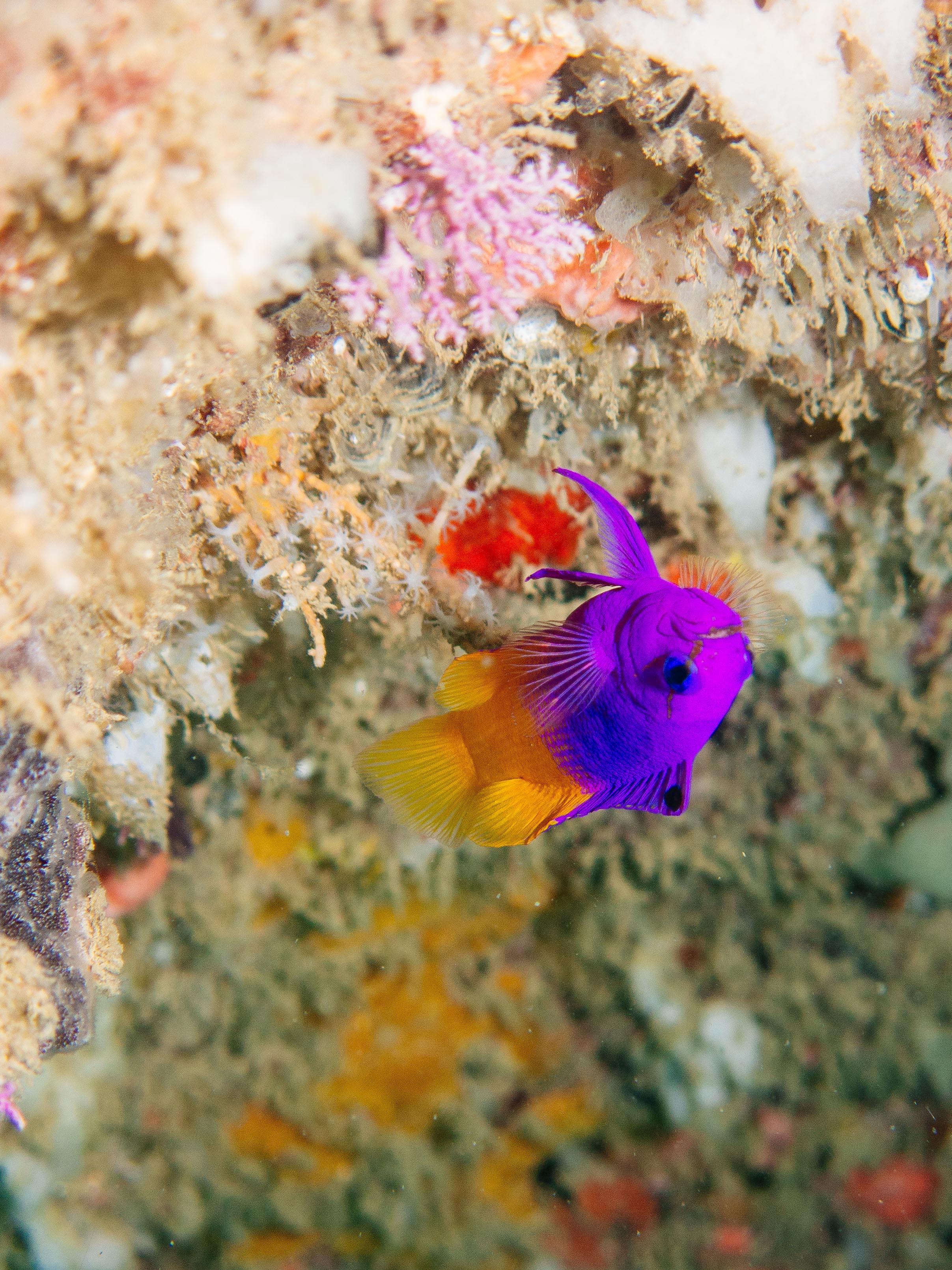 underwater-13.jpg