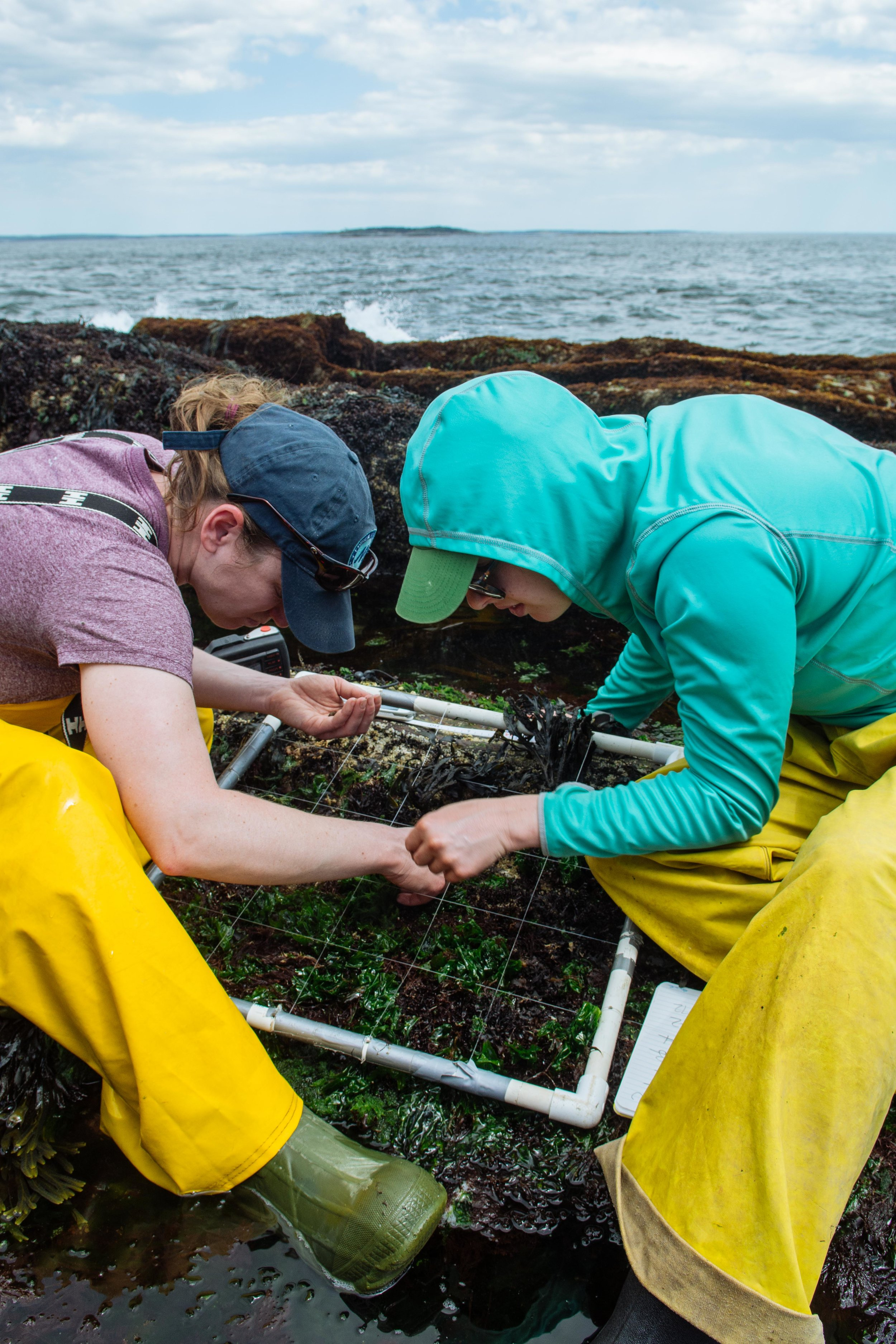 Researchers assess biodiversity, a measure of health of an ecosystem, at a field site.