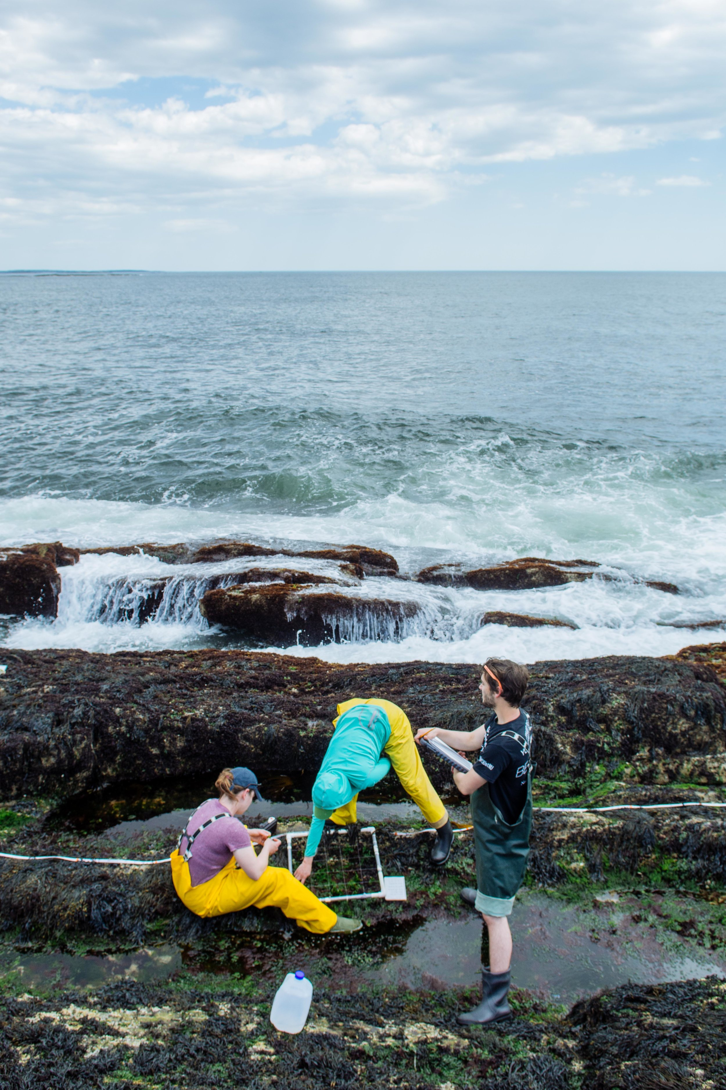 Researchers assess biodiversity at Bailey Island, Maine.