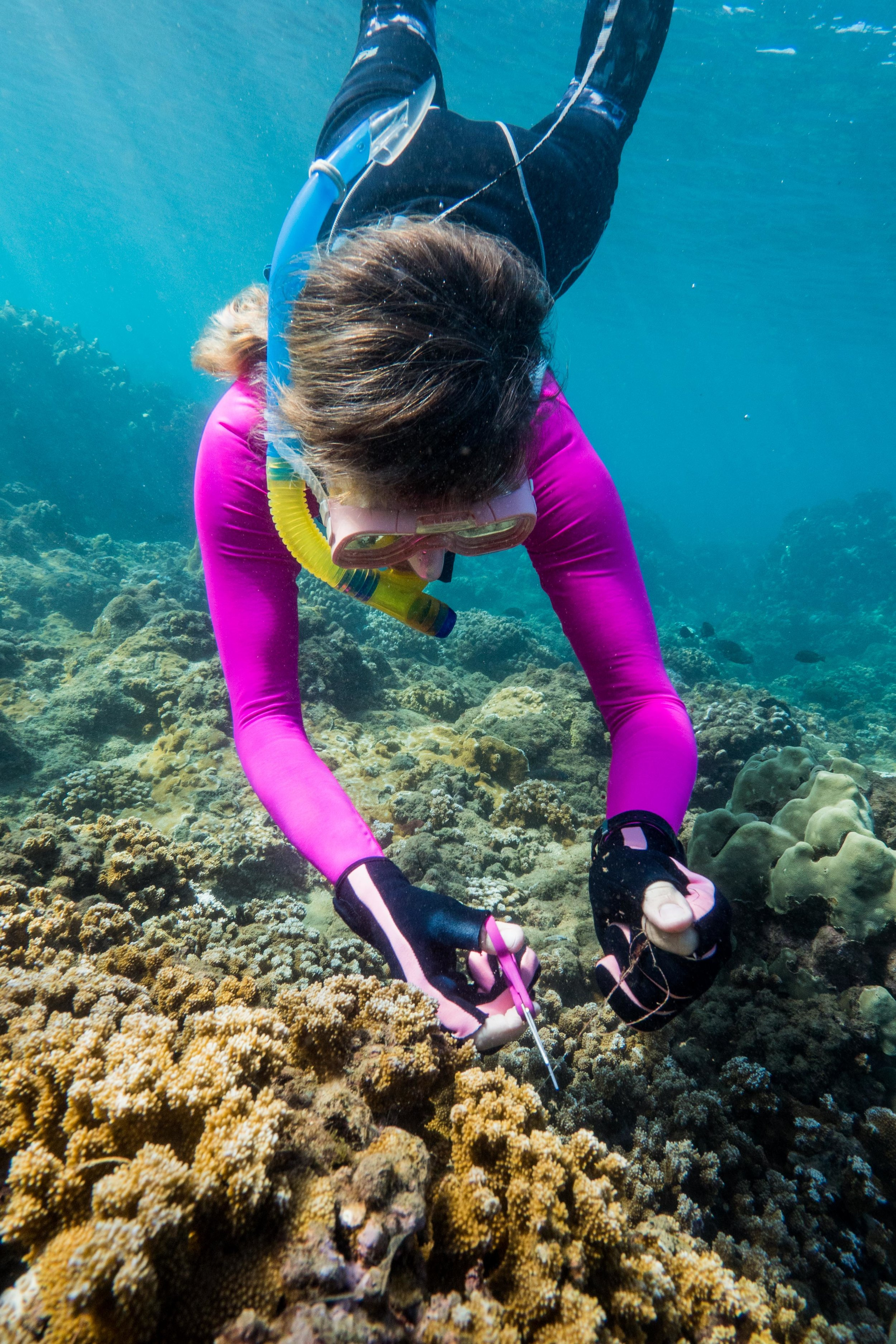 A TIRN volunteer works to cut fishing line away from coral.