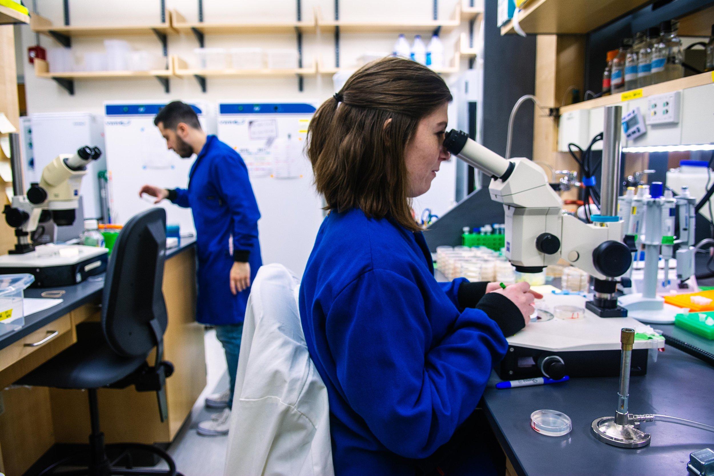Graduate student Jodie Norris sorts C. elegans worms in the Apfeld Lab.