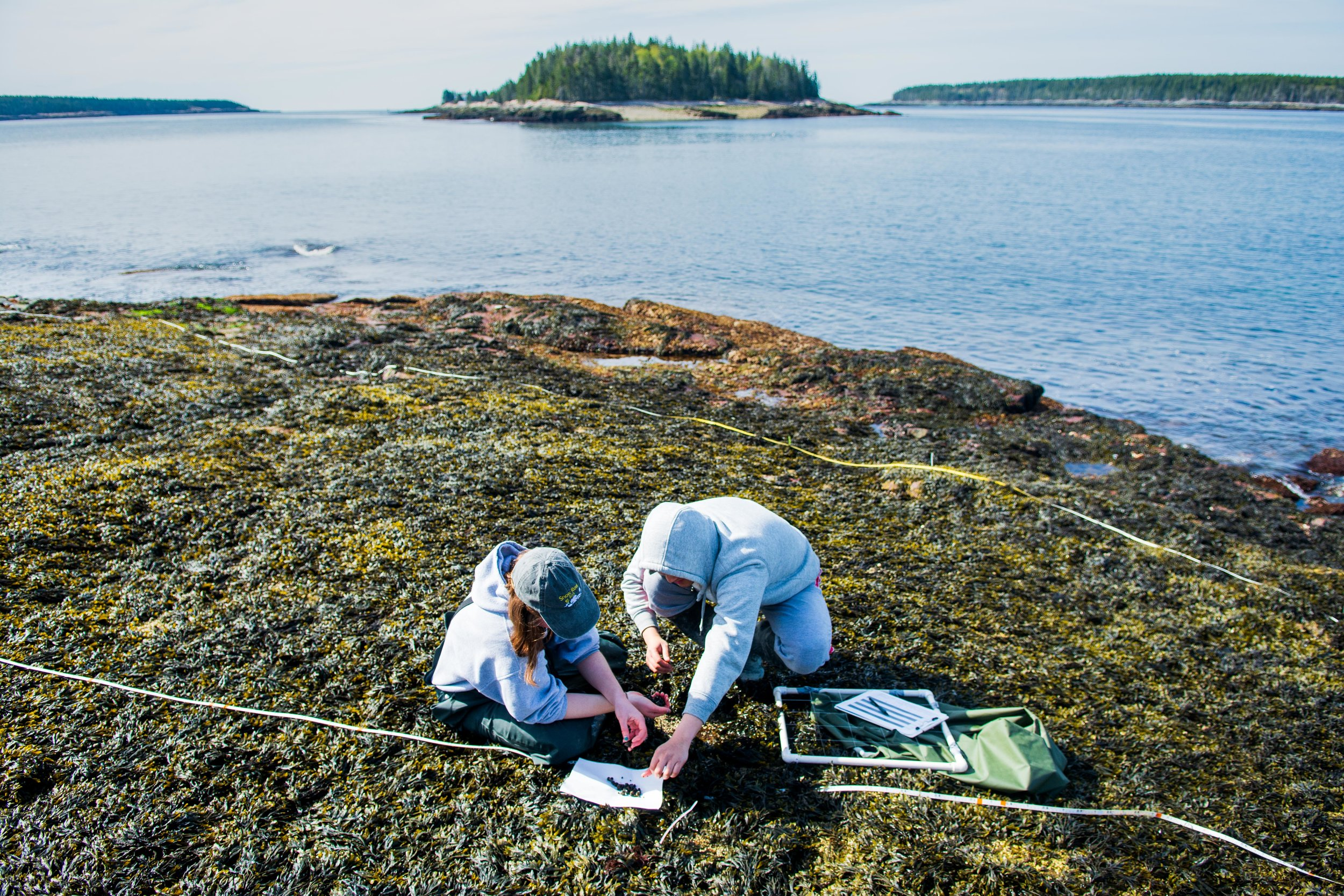 Undergraduate researcher Sahana Simonetti and Senior Lab Technician Francis Choi conduct a biodiversity survey in Winter Harbor, Maine.