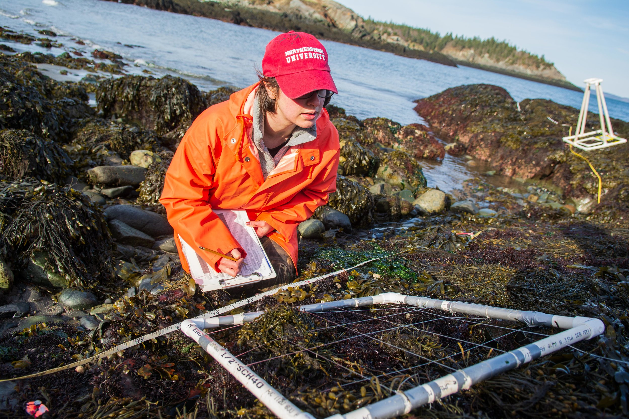 Helmuth Lab graduate student Jessica Torossian measures percent cover of algae — how much of the rock surface is covered by each species — during a biodiversity survey in Hamilton, Maine.
