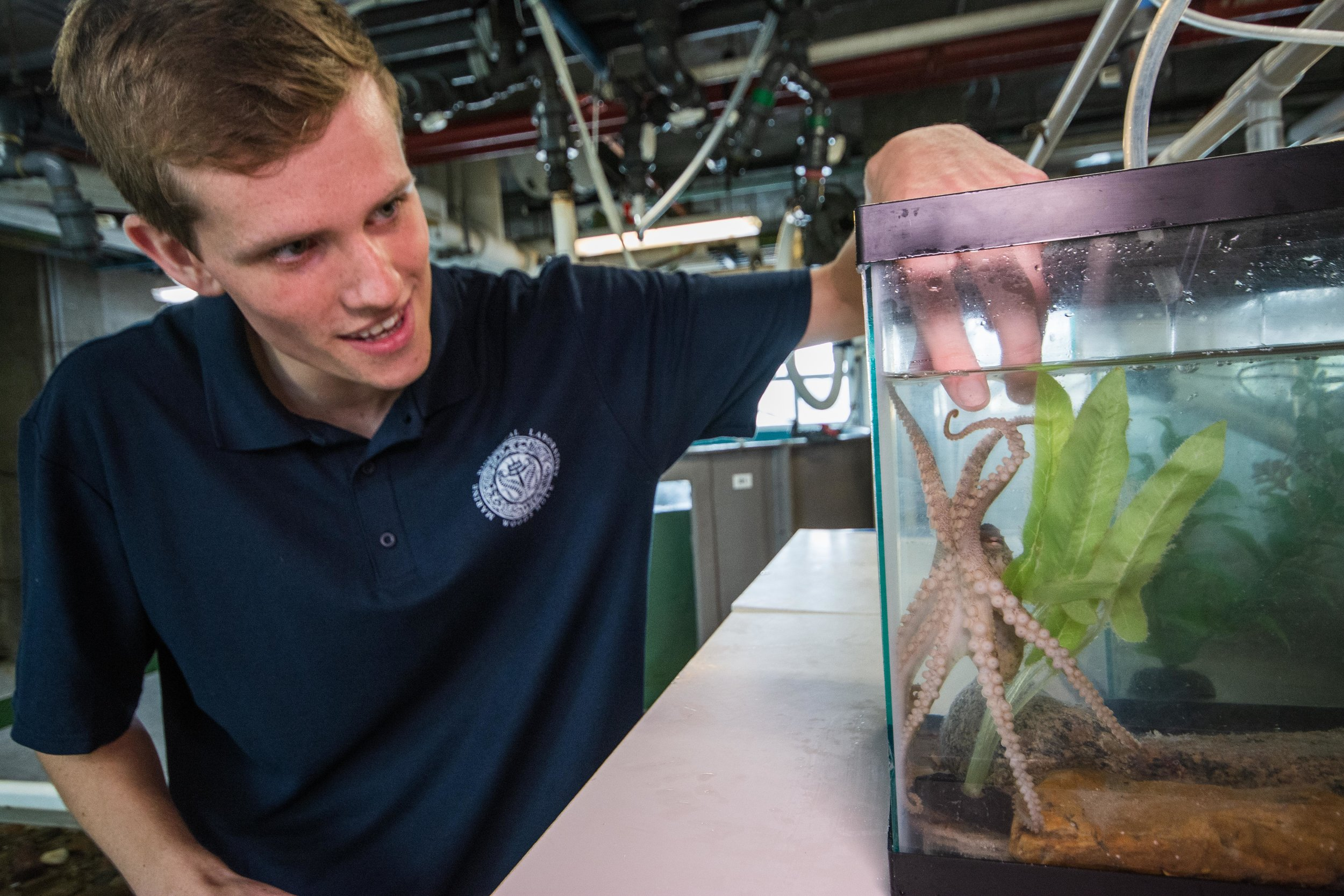 Matt Everett and one of the California Two-spot octopuses held in the Marine Biological Laboratory outreach tanks.