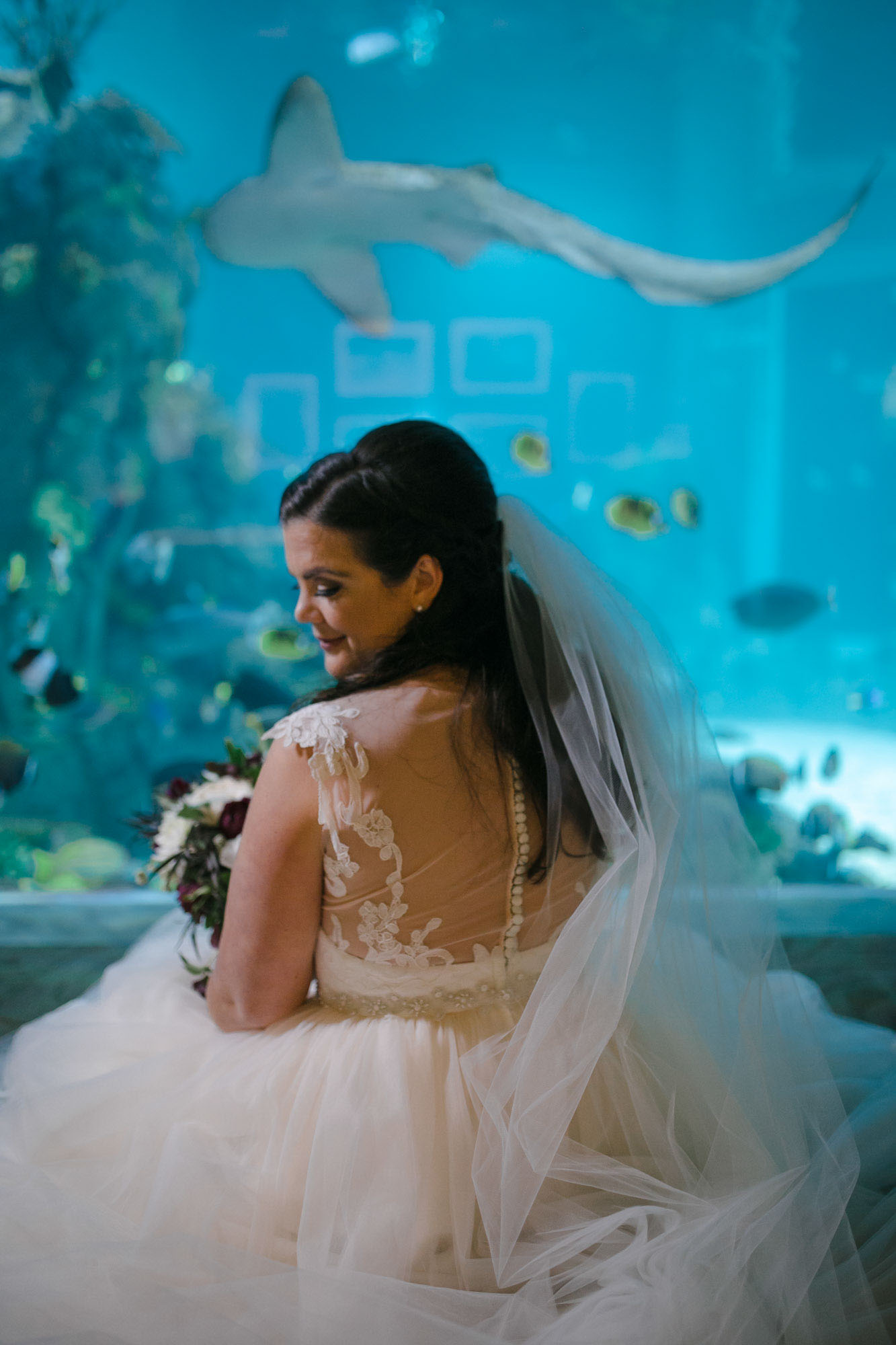 toledo-zoo-wedding-pictures-48.jpg