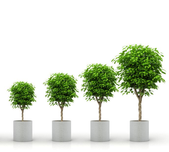 TreesGrowthiStock_000017443132Small v4.jpg