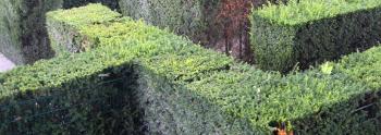Garden StragegyiStock_000017868702Small v2.jpg