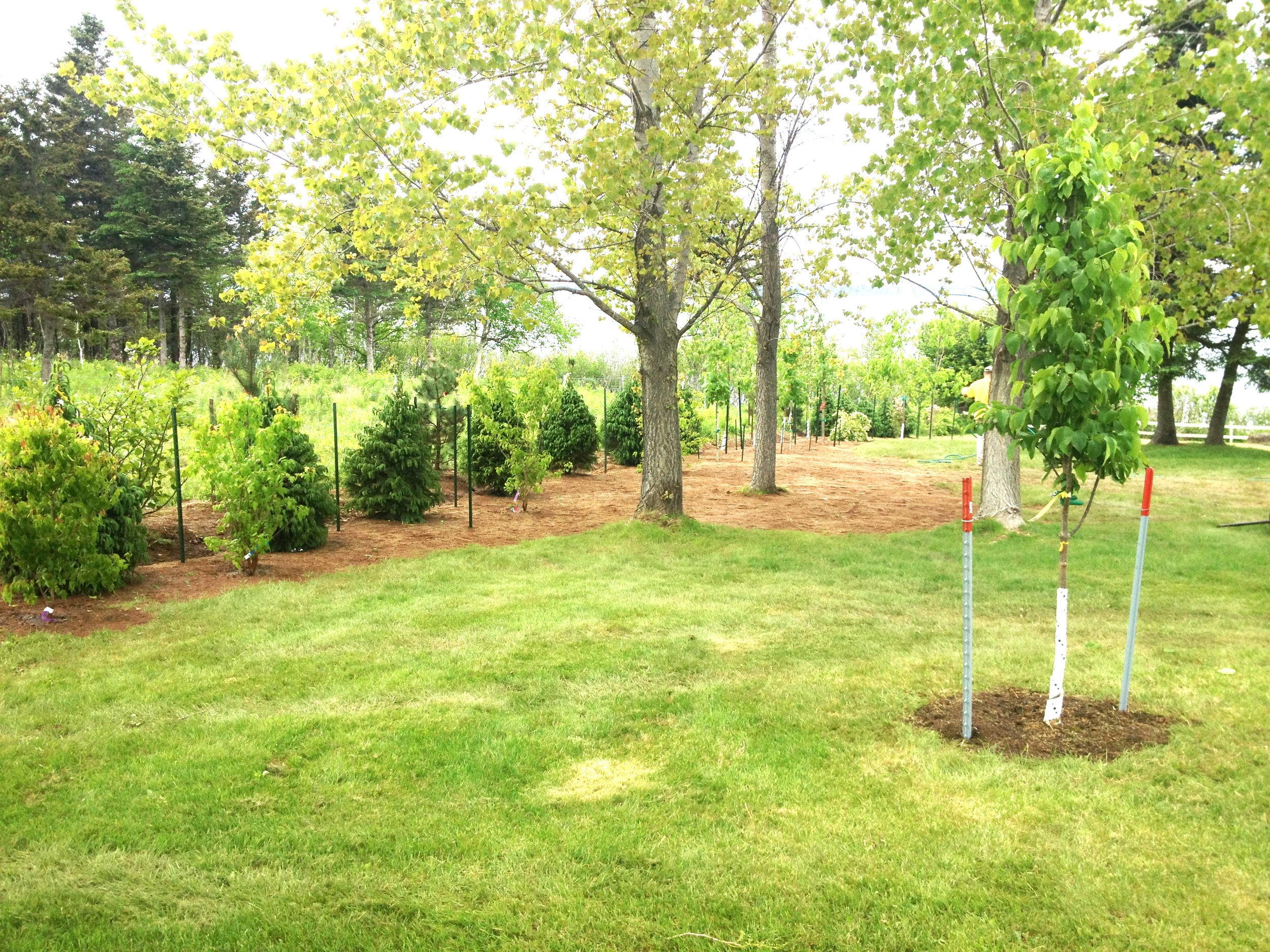 Brenda Carbontte trees - edited for website.JPG