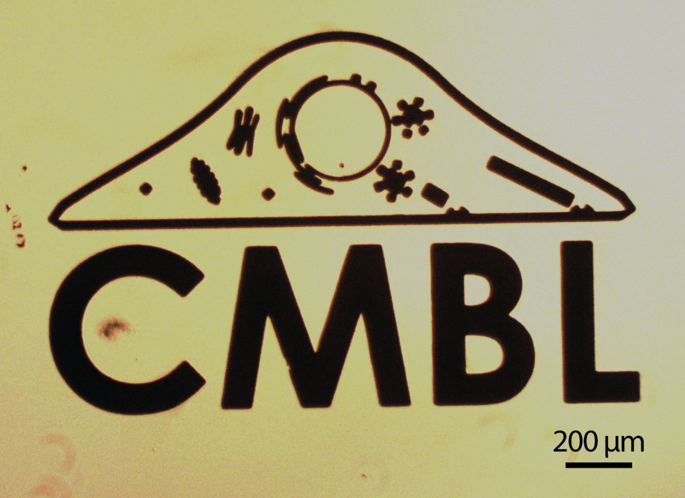 Gold patterned CMBL logo created using photolithography, gold evaporation and lift-off