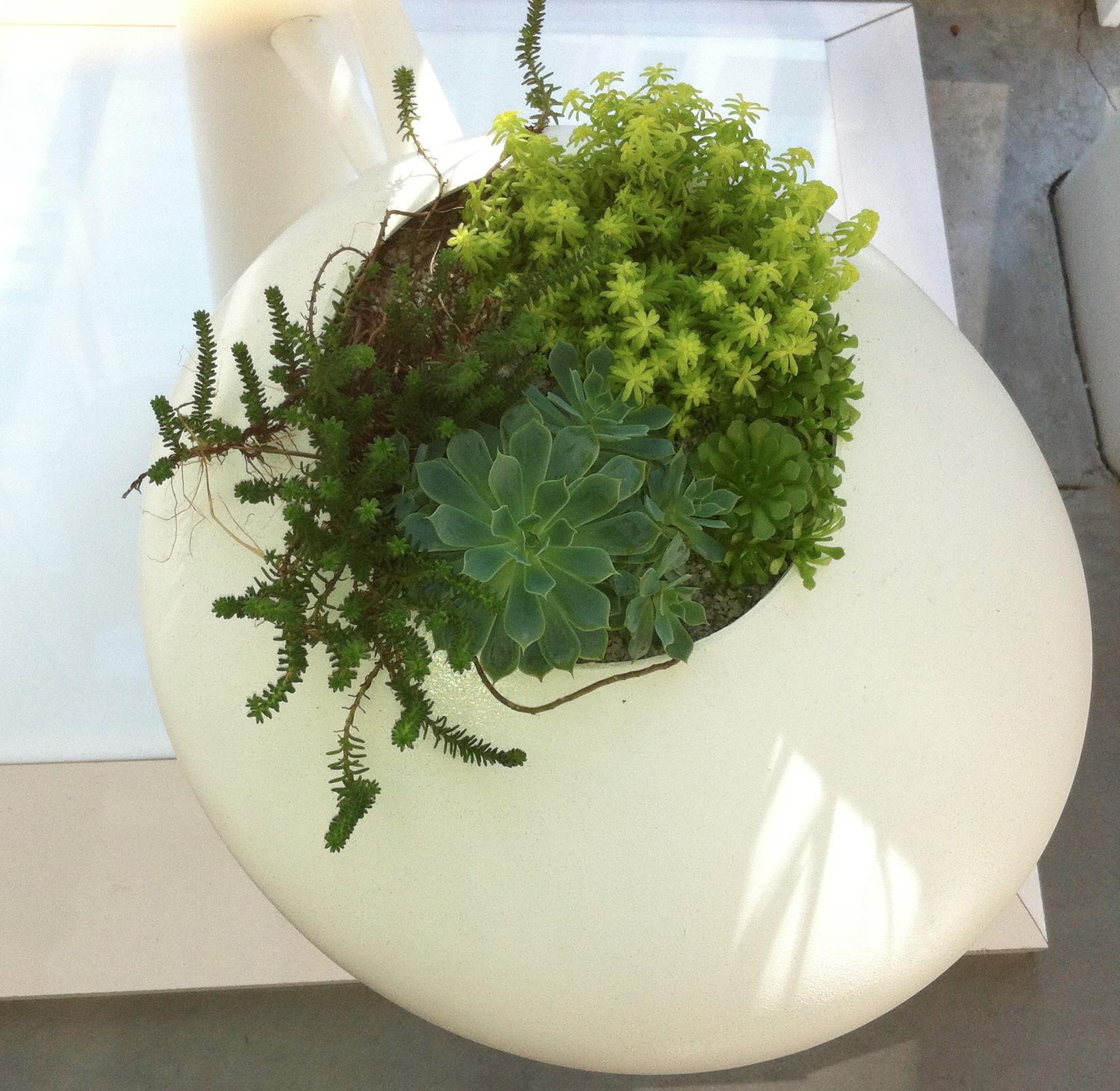 succulent_pod_garden.JPG