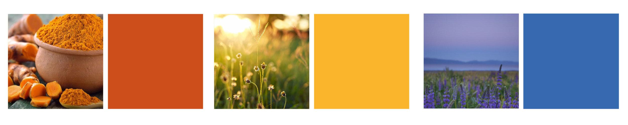 Smarter Nutrition Branding Colors - KLN Design