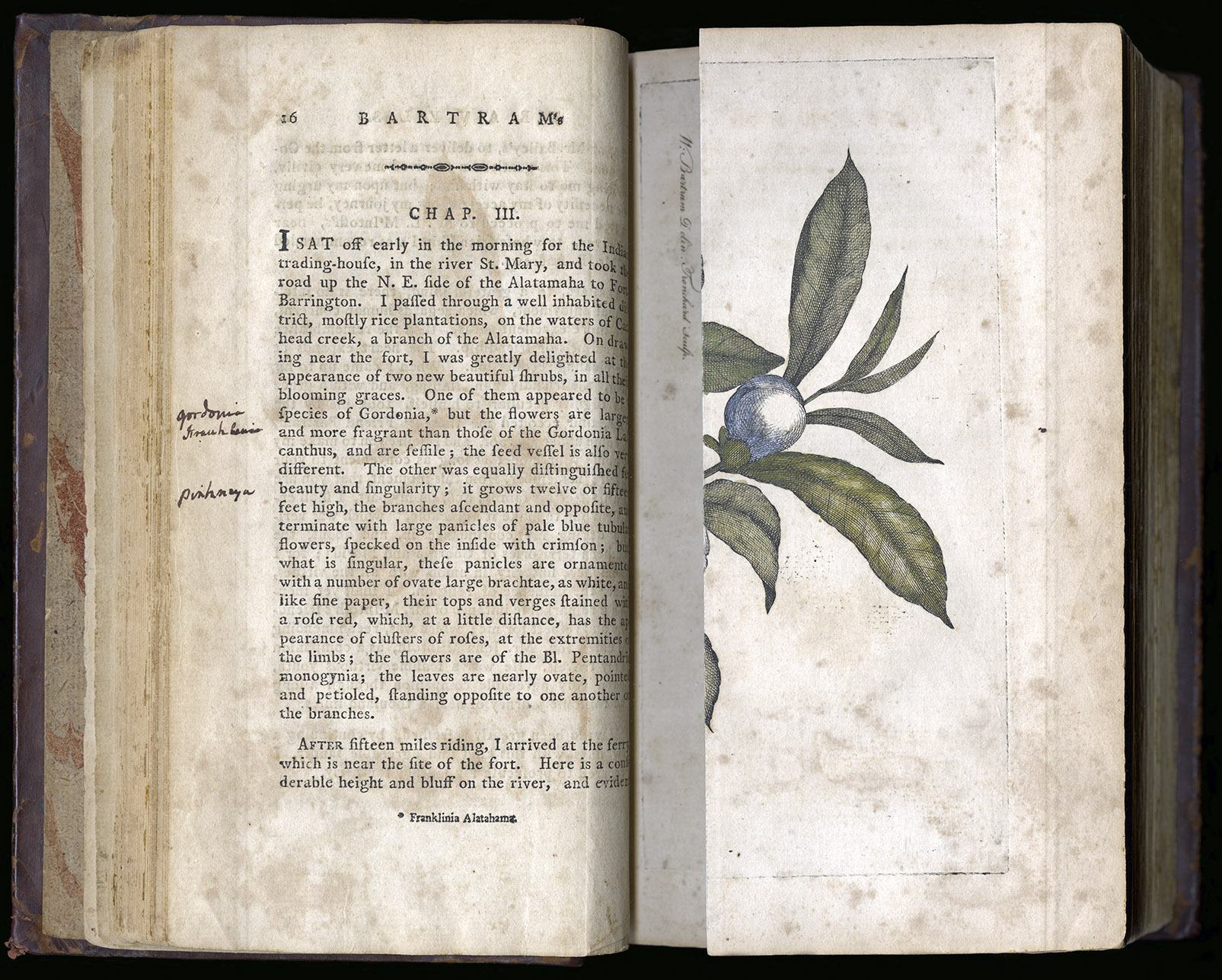 """Hamilton's note of the scientific name """" Gordonia Franklini """" for Franklinia references part of a rare illustrated collection of new plants from Paris, published by the botanist Charles Louis L'Héritier de Brutelle in 1791. And the genus name  Pinckney  was not published as a scientific name until 1803 by the French botanist André Michaux. Hamilton may have learned of both these then current scientific names from Michaux's  Flora . Note the Franklinia plate folded to the right (as shown in the image above). (Image courtesy of the Sterling Morton Library)"""