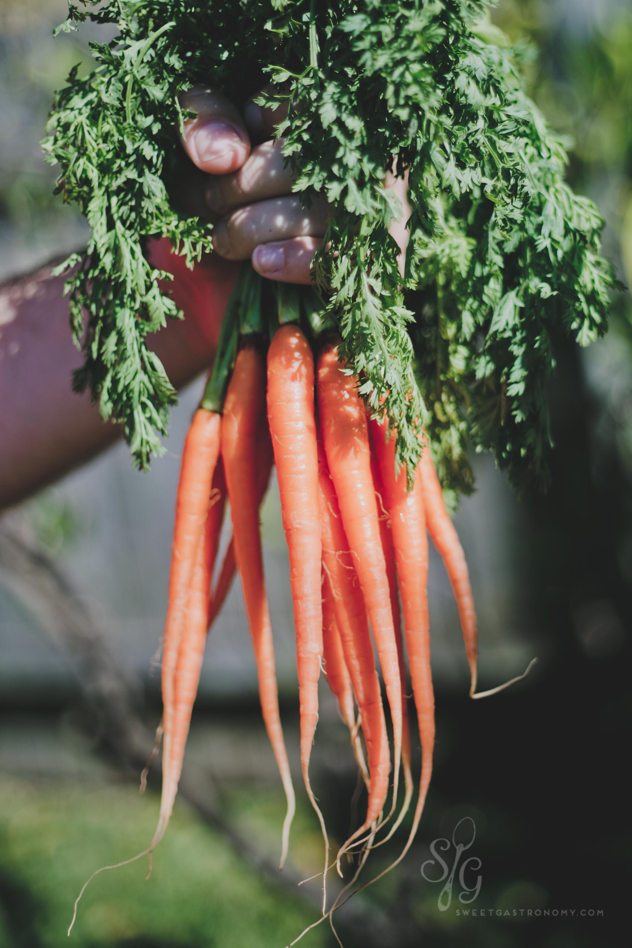 sweetgastronomy.com_carrots