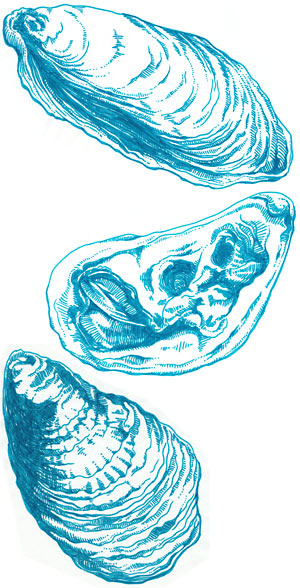 Hand-drawn, custom oyster illustrations by Arielle.