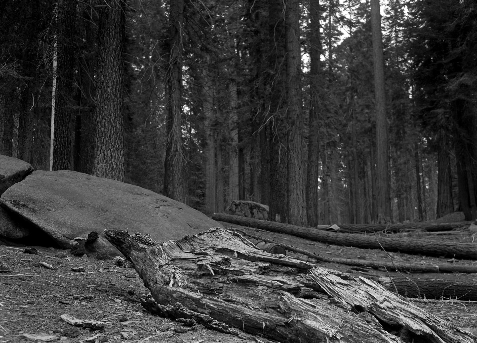 Forest Floor, Seqouia National Park