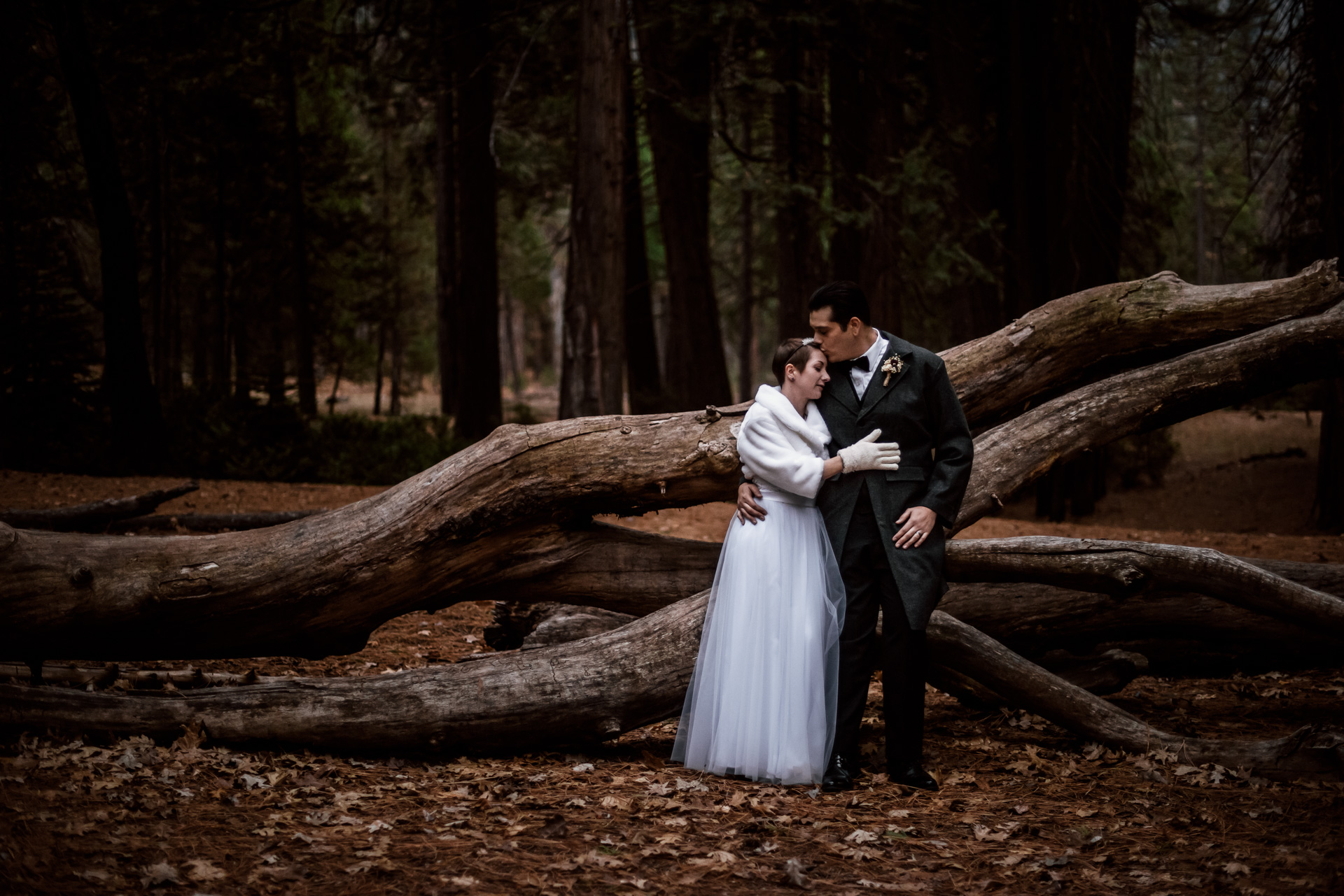 bride and groom rest against a fallen pine in their winter elopement in yosemite