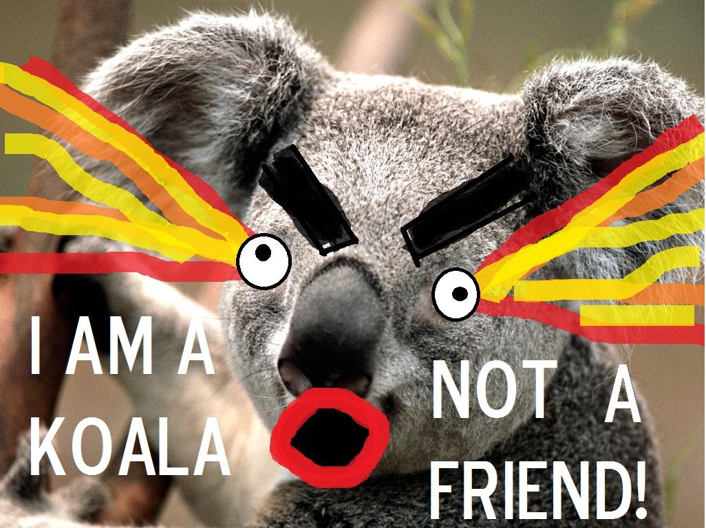 Koala Not Friend.jpg