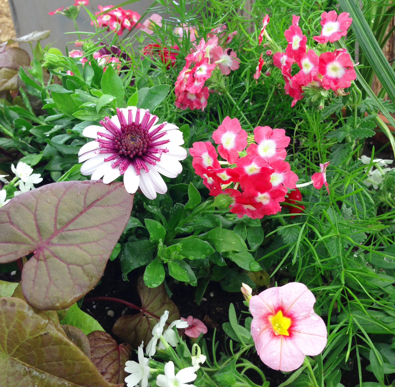 Annuals pot2.jpg