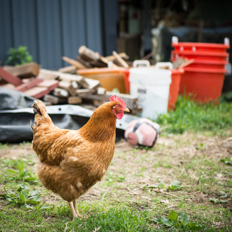 Farm-7.jpg