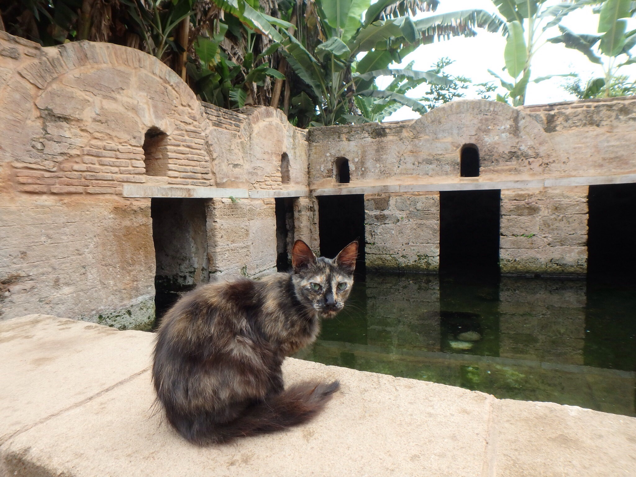 This cat and many others roam the grounds. Behind, the eel pool offers believers a hope for fertility.