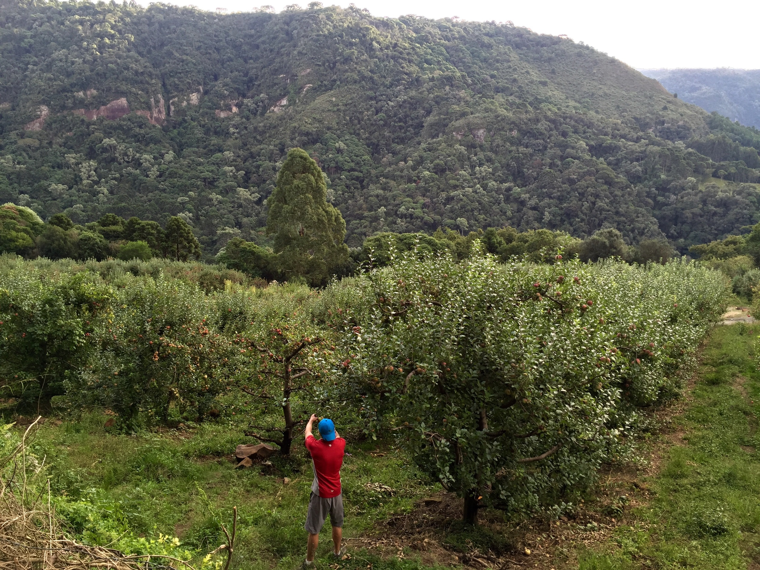 Jonathan makes himself at home at a roadside apple orchard in the Serra Catarinese (mountain region of Santa Catarina)