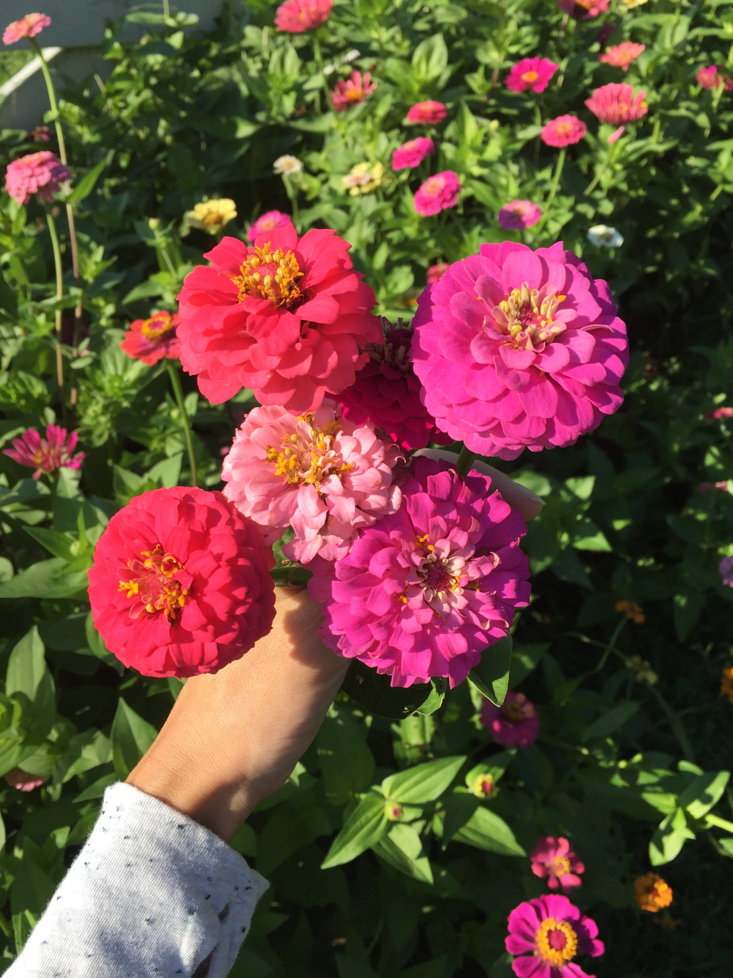 Yayas flowers