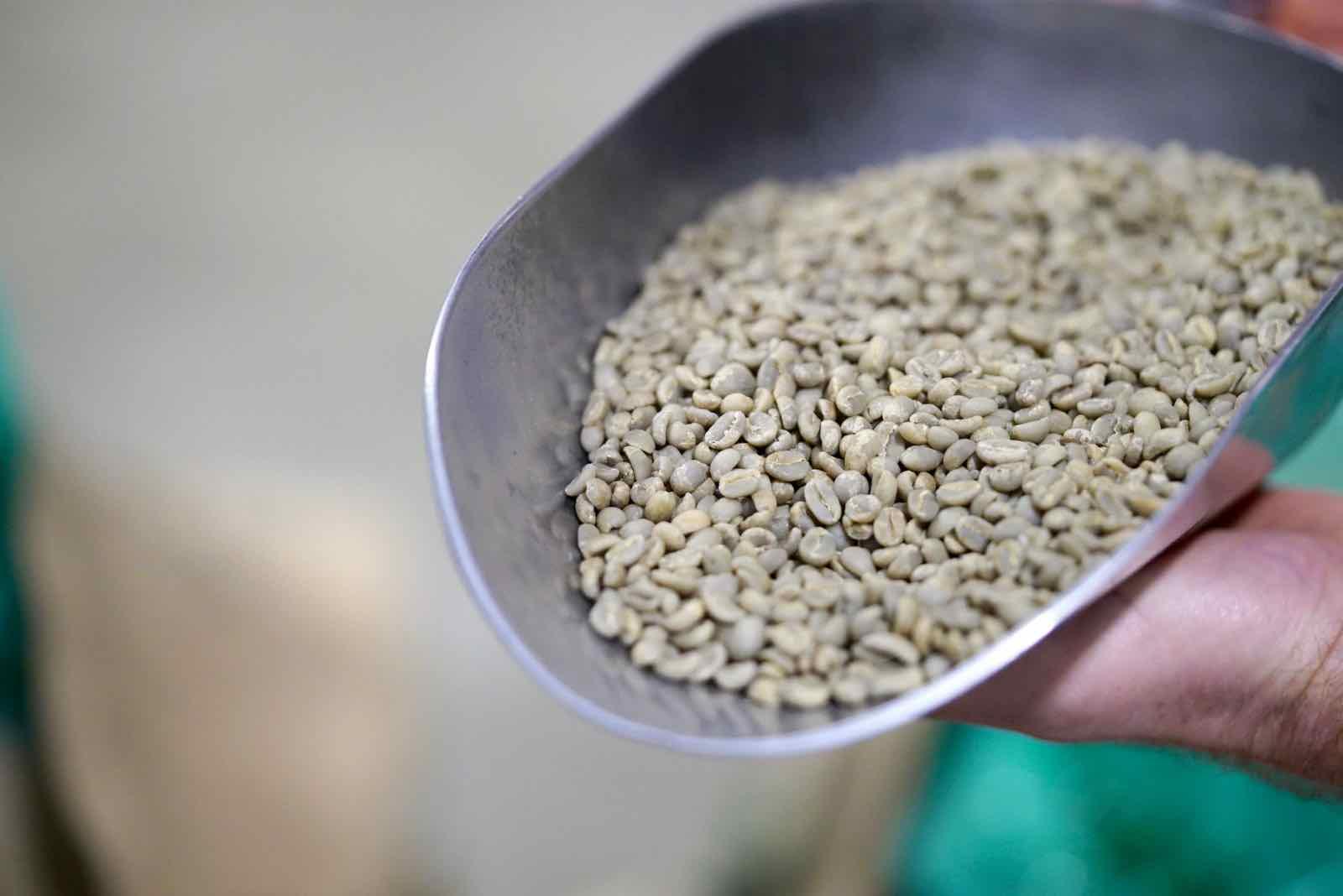 lamill-coffee-factory-tour-2.jpg