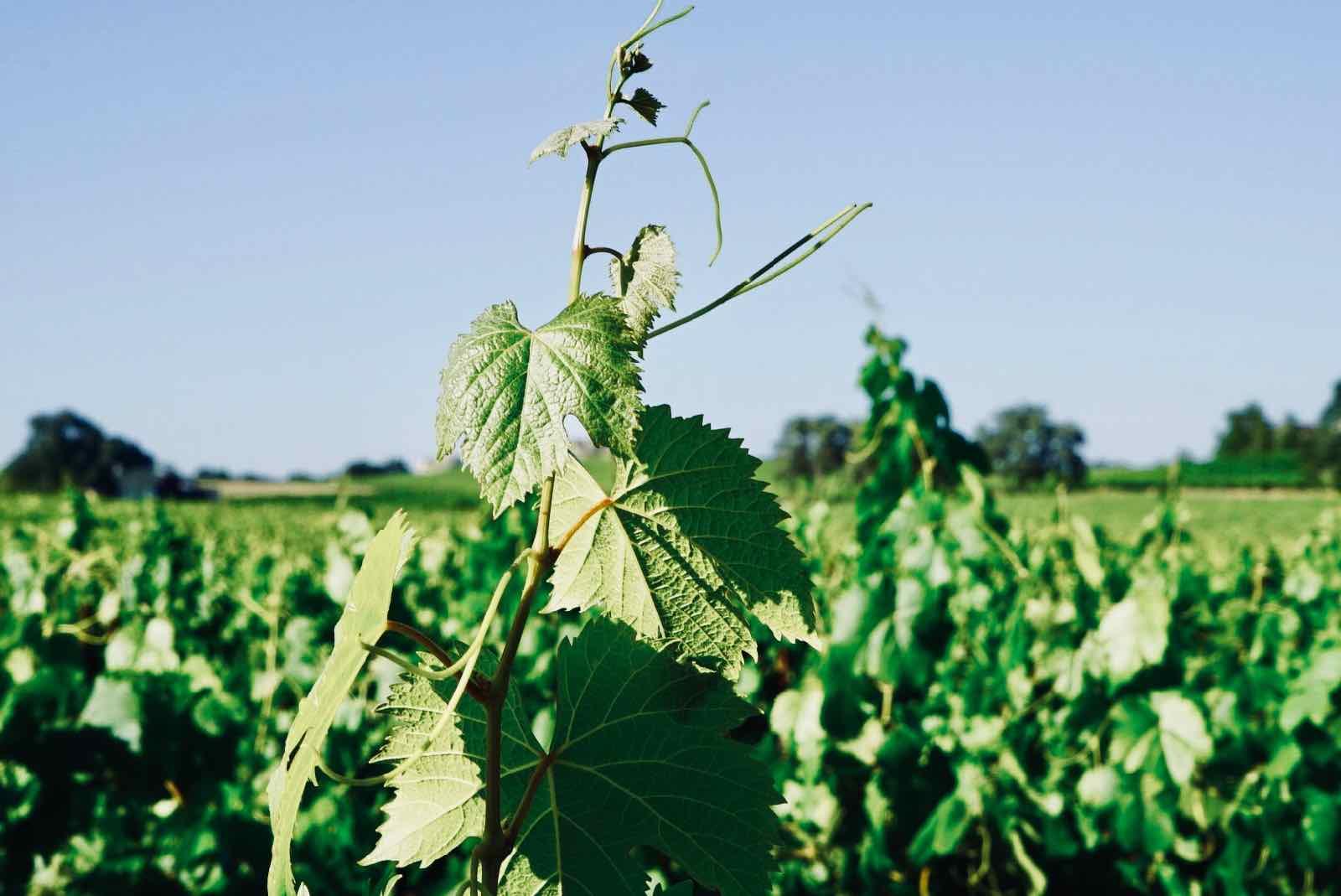summerwood-winery.jpg