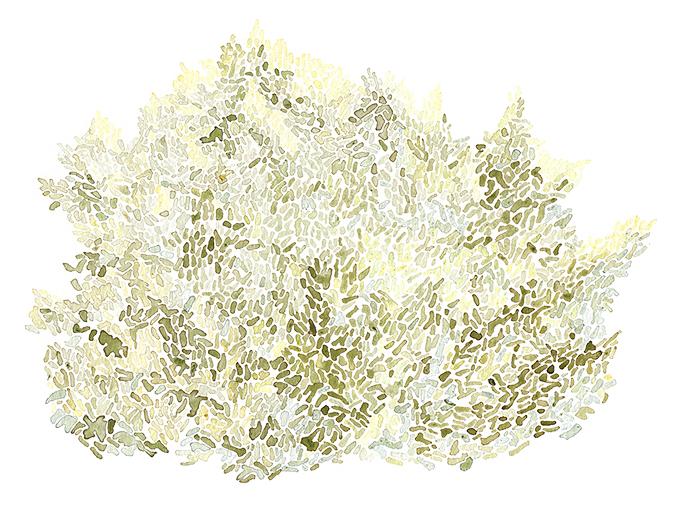 """N38°17'39"""", W122°17'18""""  Weeds, berries, dandelions / 13 in x 10 in"""