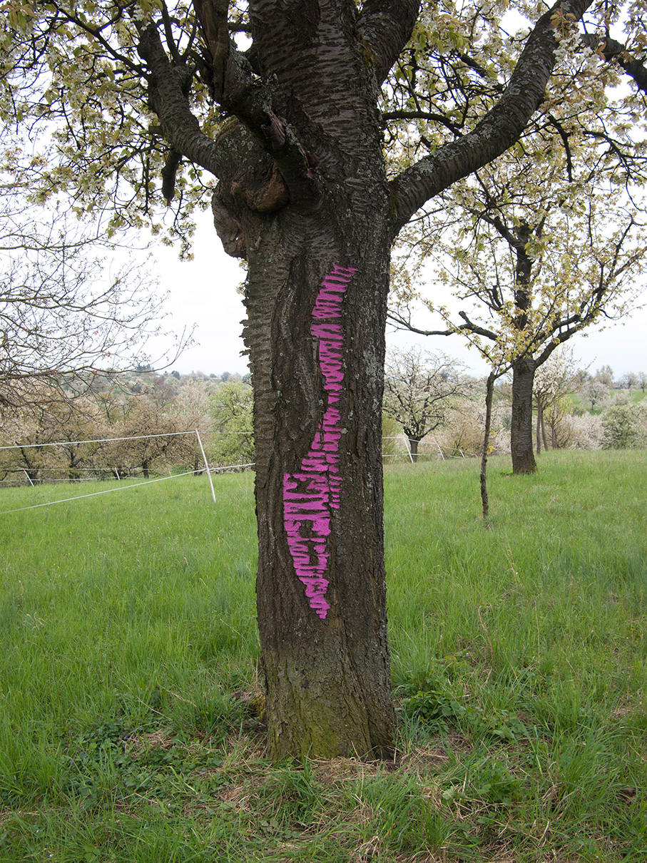 Tree bark  (pink) / Karlsruhe, Germany